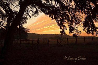Oaks___Sunset_Larry_Ditto_70K6228
