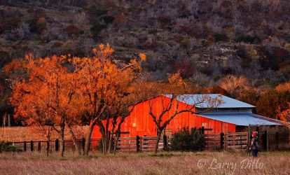 Red_Barn_Larry_Ditto_MG_6718