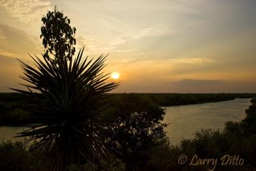 Rio Grande below Falcon Dam in s. Texas.  Yucca in foreground at sunset