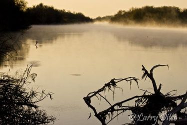 Fog lifting from the Rio Grande at Salineno, Texas at sunrise, early February.