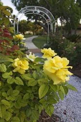 Rose Garden_x0z0142