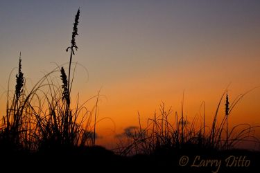 Sea_Oats_After_Sunset_Larry_Ditto_MG_2276