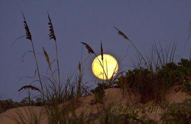 Sea_Oats___Full_Moon_Larry_Ditto_MG_2241