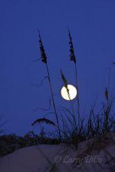 Sea_Oats___Full_Moon_Larry_Ditto_MG_2253
