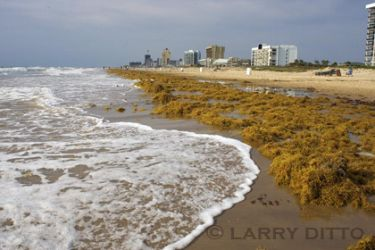 South_PadreIsland_3_Larry_Ditto