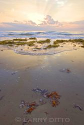 South_Padre_Island_Beach_Larry_Ditto
