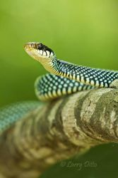 Speckled_Racer_Larry_Ditto_MG_8418
