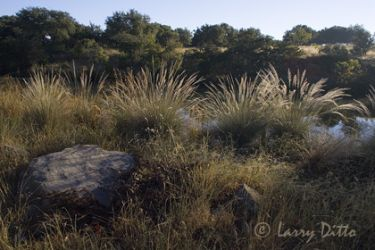 Stowers_Ranch_Larry_Ditto_x0z9231