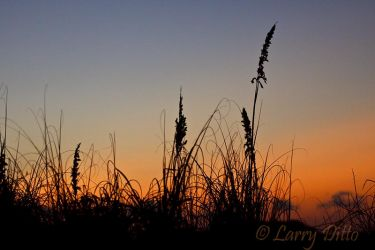 Sunset___Sea_Oats_Larry_Ditto_MG_2275