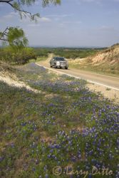 Texas_Hill_Country_Bluebonnets_Larry_Ditto