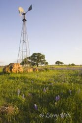 Windmill and bluebonnets in the Texas hill country, spring