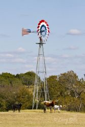 windmill and longhorns