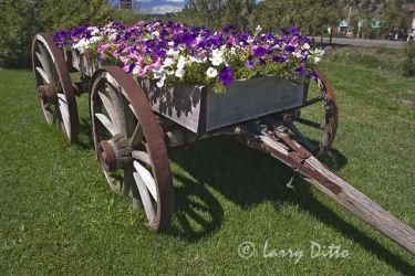 Wagon_Larry_Ditto_X0Z1685