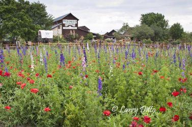 Wild Seed Farms at Fredericksburg, Texas