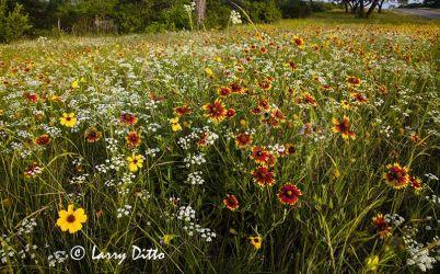 Wildflowers on the Utopia highway