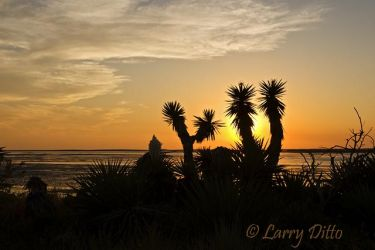 Yucca_at_Sunset_Larry_Ditto_70K0228