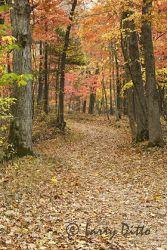 arkansas_autumn_2_Larry_Ditto_