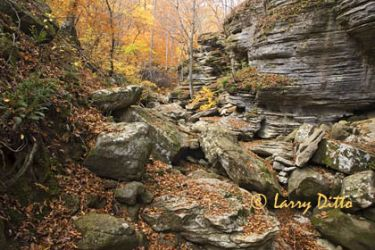 Autumn in Buffalo National River forest, Lost Canyon near Harrison, Arkansas