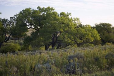 cottonwood-lined-creek_larry_ditto_