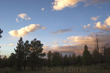 forest_Larry_Ditto_mg0168