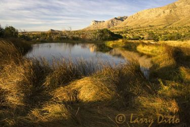 guadalupe_mountains-spring_Larry_Ditto