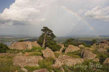 rainbow_Larry_Ditto_mg7518