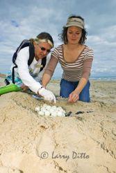 sea_turtle_nest_survey_larry_ditto_x0z9373