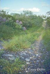 south-texas-brush_Larry_Ditto