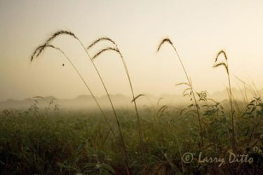 sunrise-and-grass_larry_ditto